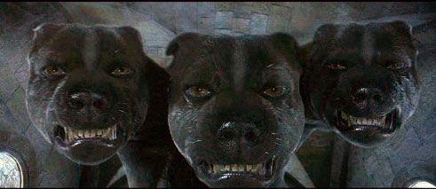 fluffy-harry-potter-3-three-headed-dog-historys-famous-dog-ark-animal-centre