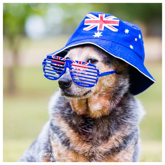 Akemi-Photography-Aussie-Dogs-for-Australia-Day-15